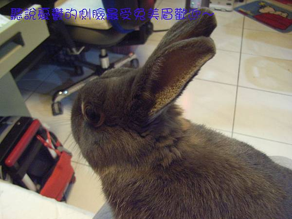 仙太郎2010春季近拍帥照(2)