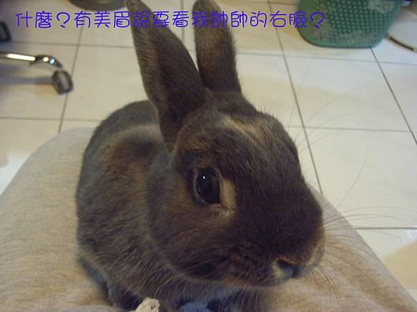 仙太郎2010春季近拍帥照(7)