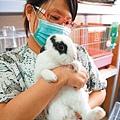 兔年入尾聲 嚴重棄兔潮來了….JPG