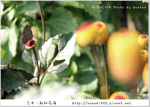 image 066.jpg
