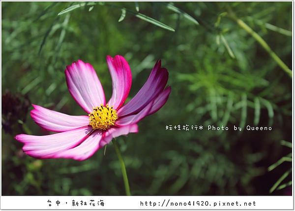 image 125.jpg