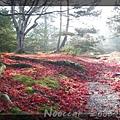 晚秋的落楓