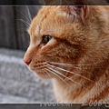 建成寺的看門貓