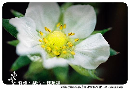 20100423-diy-01.jpg