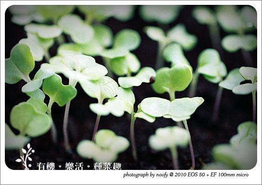20100423-diy-05.jpg