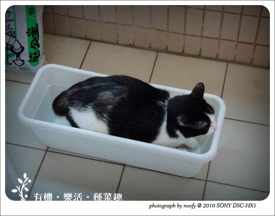 20100501-cat-01.jpg