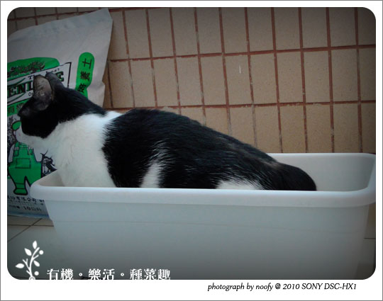 20100501-cat-03.jpg