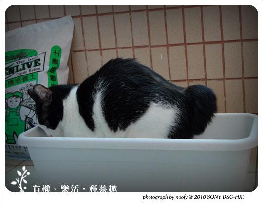 20100501-cat-04.jpg