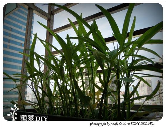 20100502-diy-03.jpg