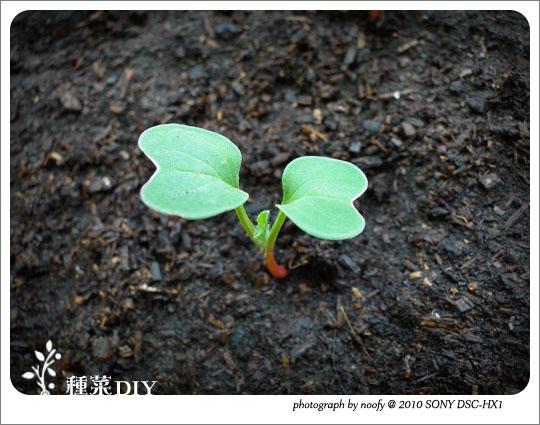 20100508-diy-02.jpg