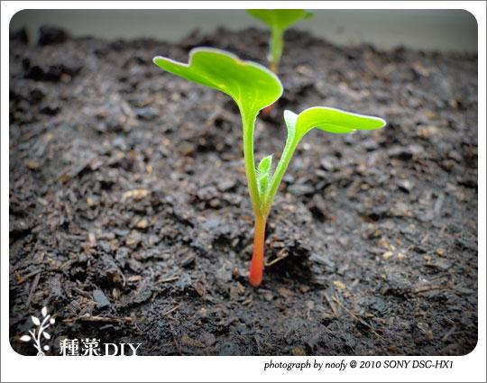 20100508-diy-03.jpg