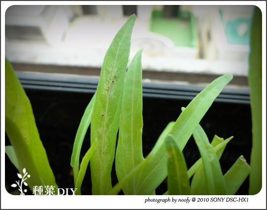 20100515-diy-03.jpg
