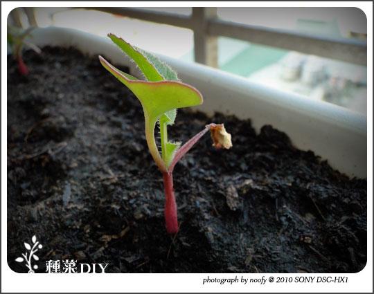 20100518-diy-05.jpg