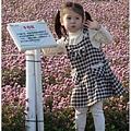 136-1011212新社花海131