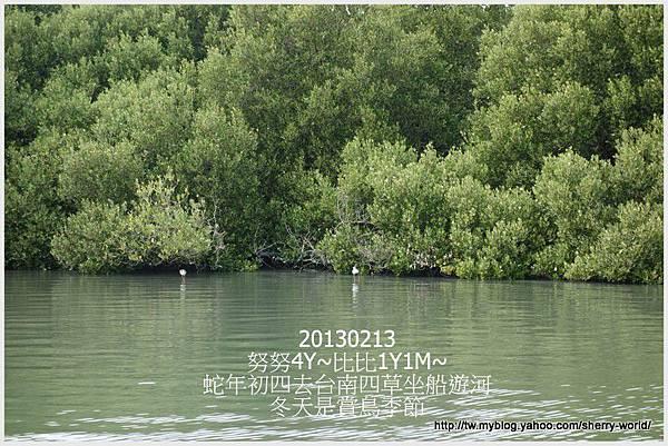21-1020213好玩的四草搭船遊河&人爆多的安平16