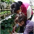 02-1020215採草莓1