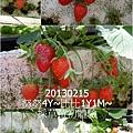 03-1020215採草莓2