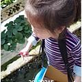 04-1020215採草莓3