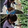 05-1020215採草莓4