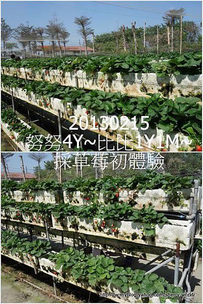 06-1020215採草莓5