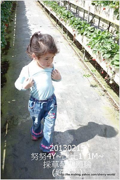 09-1020215採草莓8