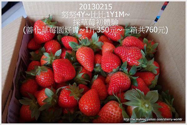 10-1020215採草莓9