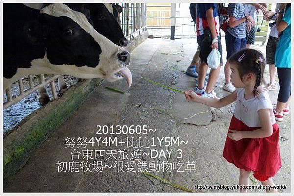 40-1020605台東鹿野森活民宿_熱氣球_初鹿牧場39