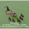 1-1030526豐樂公園野餐.jpg