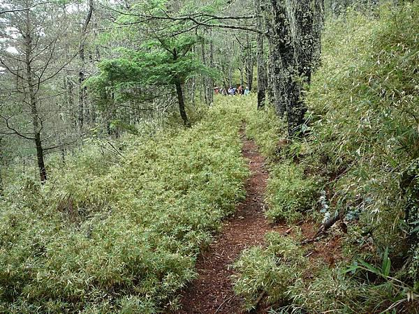 這邊是輕鬆的林道^^