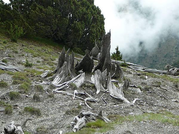 八爪巨木 :P