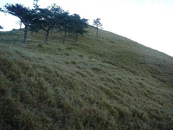 八通關大草原