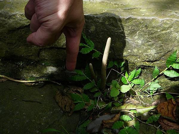不知道是啥植物...手指是當比例尺用的啦~