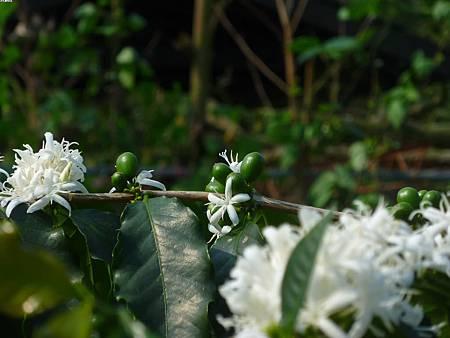 03若是三四月去就是看到花跟綠豆子