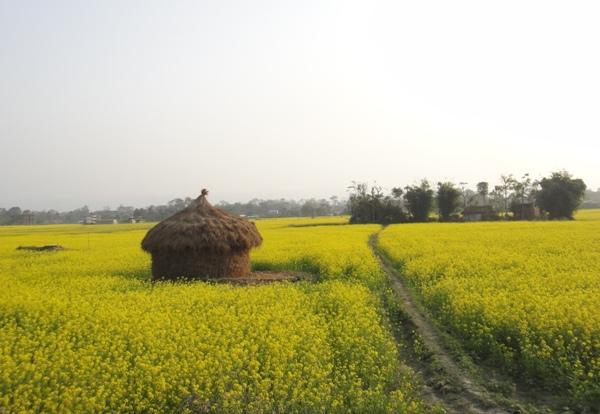 尼泊爾(5)-奇旺
