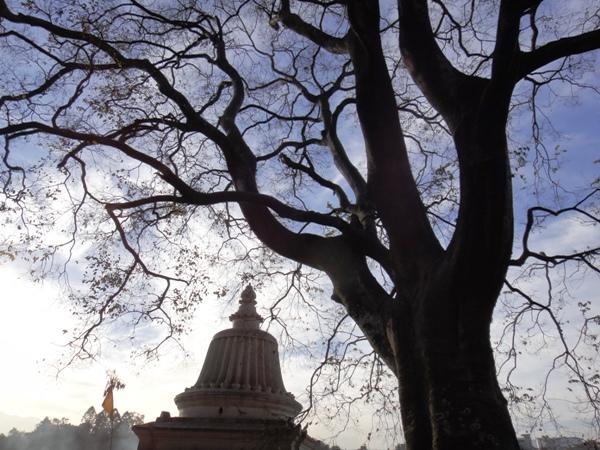 尼泊爾(12)- 藍天與枝枒