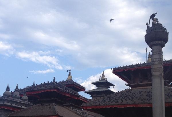 尼泊爾(16) - 鴿子群