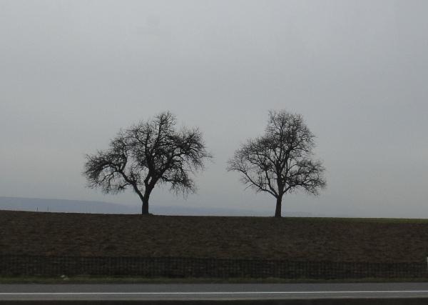 維也納-雙樹構圖