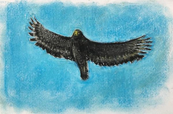觀音觀鷹生態繪畫示範-大冠鳩飛翔