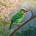 壓克力(1)_5_五色鳥-1