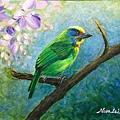 壓克力(1)_5_五色鳥-3