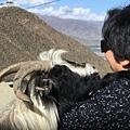 西藏(4)_7_陶醉