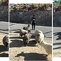 西藏(4)_6_牧羊三部曲