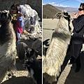 西藏(4)_8_餓羊撲娘