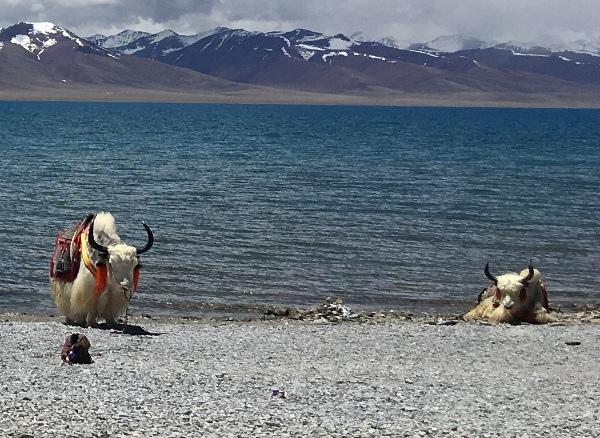 西藏(11)