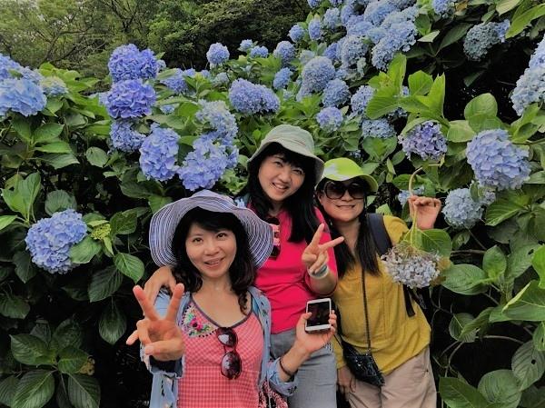 繡球花_32_繡球花
