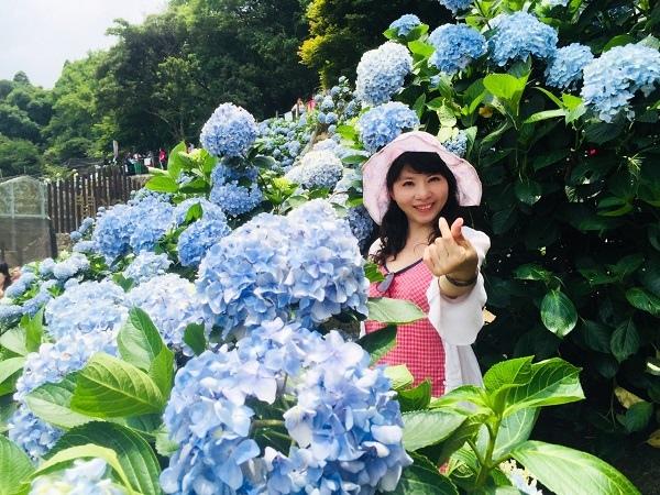 繡球花_46_繡球花