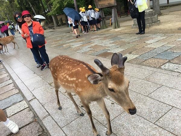 日本(1)_21