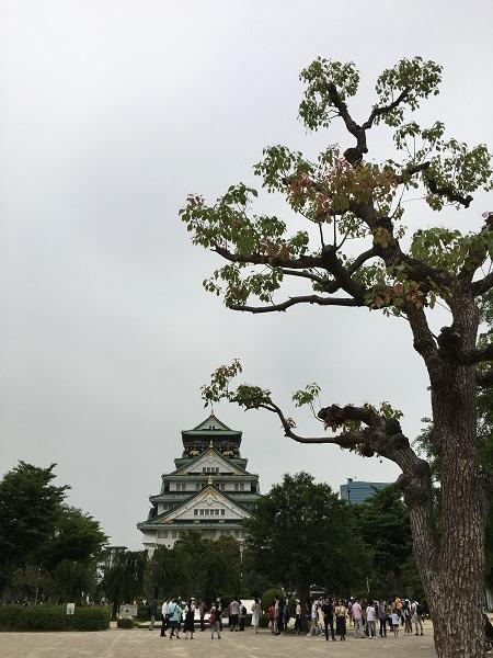 日本(9)-17