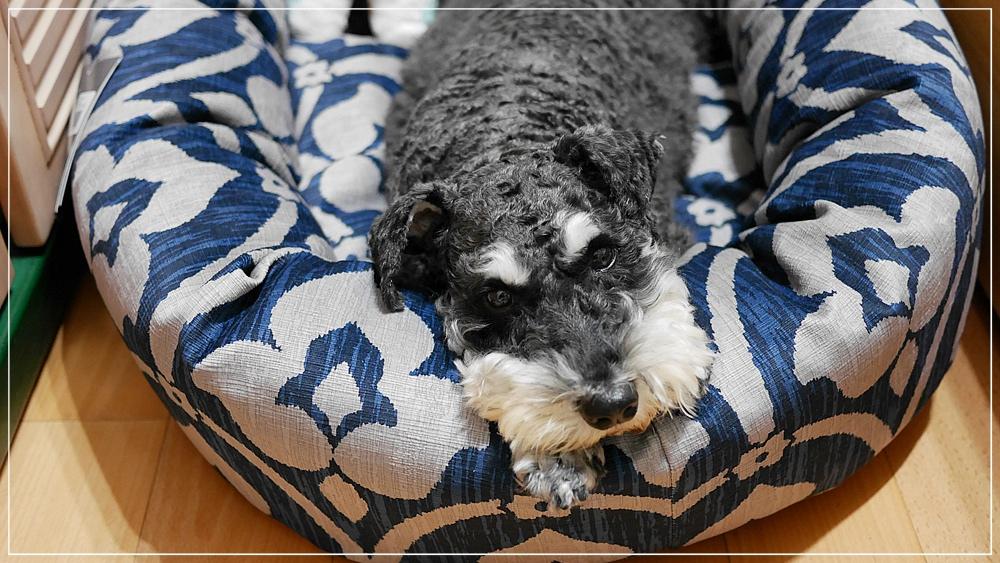 可拆洗寵物床墊推薦◆Bowsers甜甜圈寵物睡床◆傳說中的寵物界席夢思床果然名不虛傳!姆姆超愛~清洗也很方便!