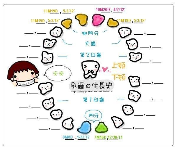 安安乳牙生長圖-[11M19D] 20120503 第四五六顆牙